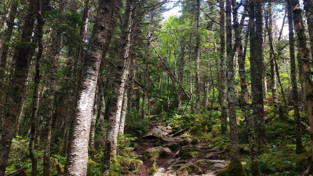 Appalachian Trail Übersicht - Vermont
