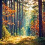 Herbst-Wald_©kurz-mal-weg.de
